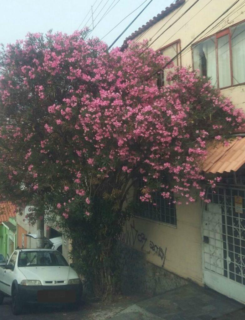 As primeiras flores já aparecem. | Foto: Maria Cristina Borges